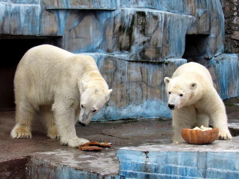 В Николаевском зоопарке белый медведь проверил качество антивандальной видеокамеры наблюдения