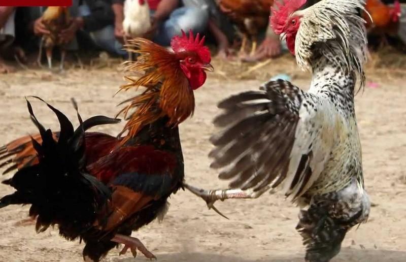 Украина возобновила поставки мяса птицы в Евросоюз
