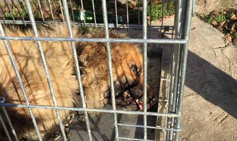 В Николаеве коммунальный приют для собак после закупки дорогого сухого корма просит у горожан приносить кашу