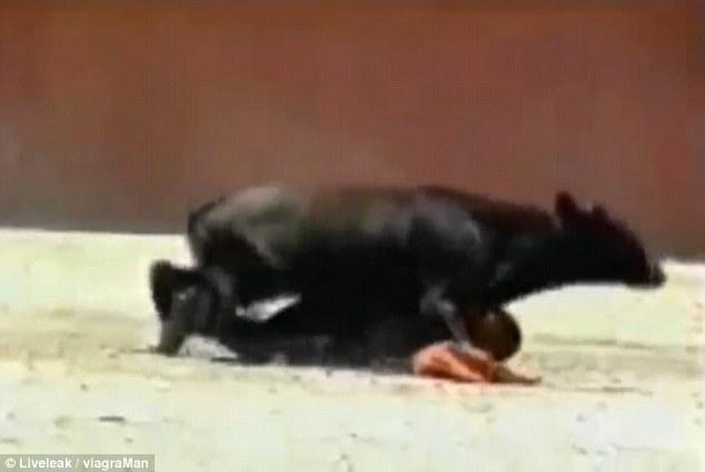 Когда что-то пошло не так: на корриде в Испании бычок чуть не изнасиловал женщину-тореро