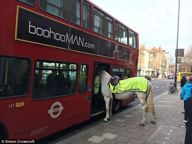 Коням нельзя! В Лондоне полицейская лошадь пыталась сесть в двухэтажный автобус