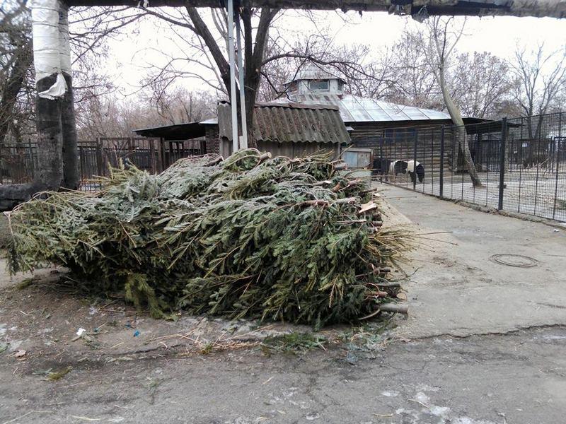 В Николаевском зоопарке снова ждут хвойные, украшавшие дома на Новый год