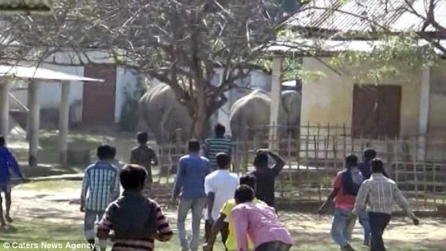 В Индии стадо из 60 диких слонов промчалось через деревню, разрушив часть домов