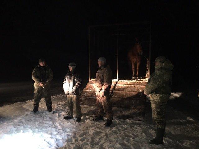 Вдруг споткнулся конь буланый. Луцкие пограничники пресекли переправку лошадей в Беларусь