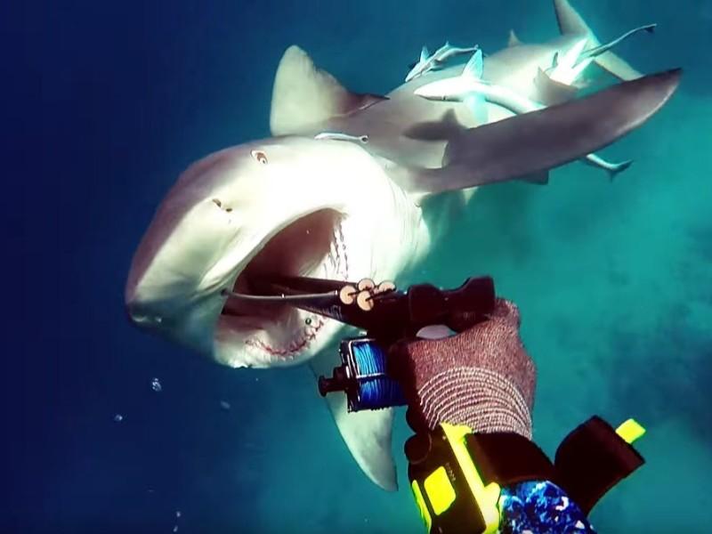Рождественское приключение. Дайвер еле отбился от опасной акулы