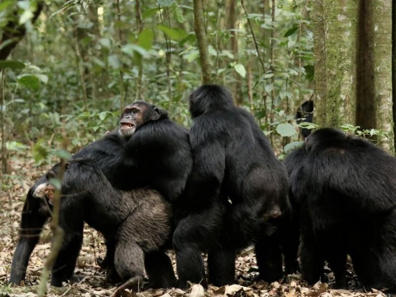 Есть ли у животных религия: исследование (ВИДЕО)