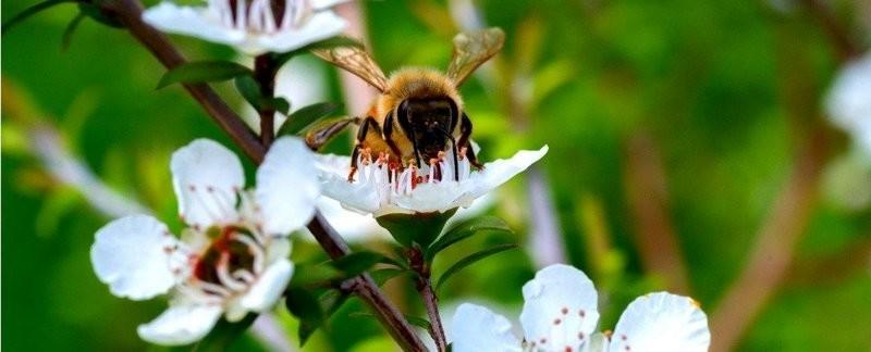 В Николаеве создадут постоянно действующую комиссию по отравлению пчел