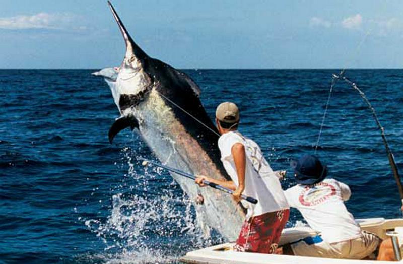 Шесть часов провел в океане рыбак, которого утащил в воду марлин