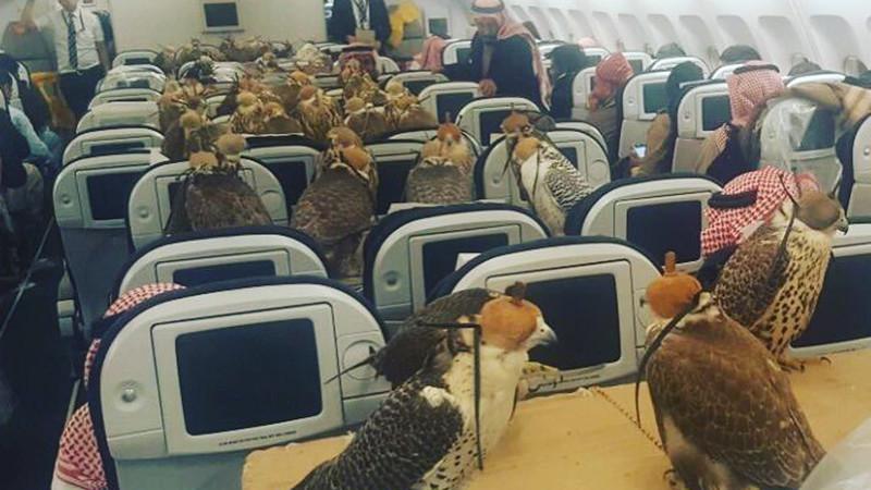 Саудовский принц выкупил самолет для 80 соколов? Говорят, птичьи билеты – уже не редкость