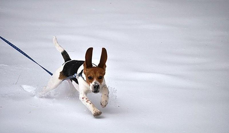 А кому-то снег в радость: снежные забавы четвероногих