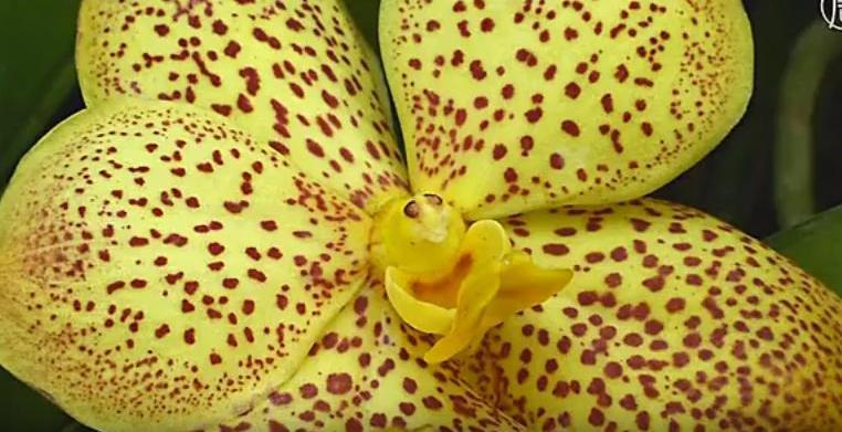 Выставка в Нью-Йорке: тысячи орхидей в полном цвету