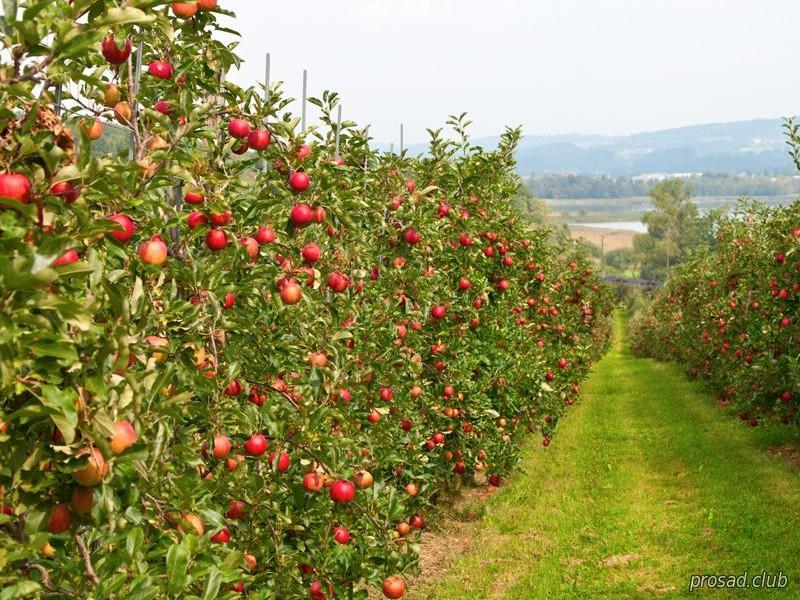 Китай готов вложить полмиллиарда в украинское садоводство