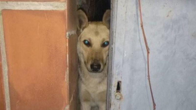В Киеве ради спасения собаки разобрали сарай
