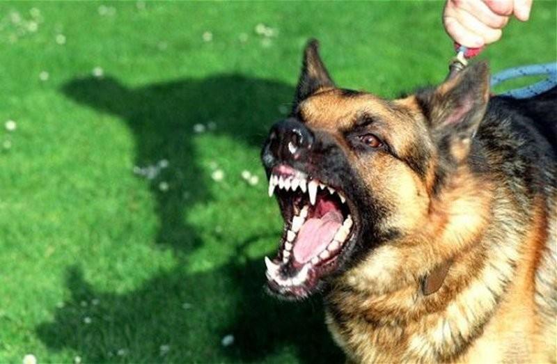 «Центр защиты животных» временно прекратил отлавливать собак и подбирать трупы животных