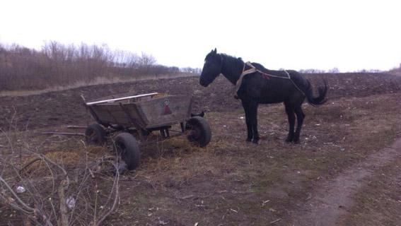 Почти «приключение»: в Кривоозерском районе два молодых человека сначала украли коня, а потом вывезли на нем еду и алкоголь из местного магазина