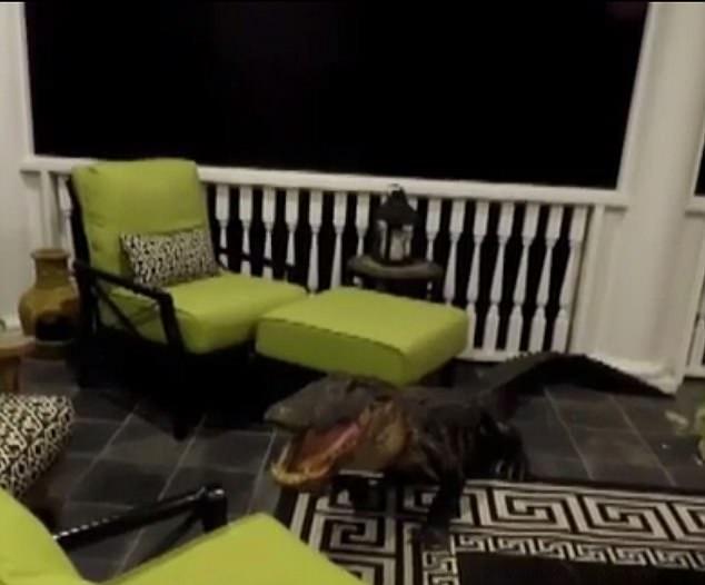 Не знаешь, что лучше: семья в Южной Каролине думала, что в дом ворвался грабитель, а это оказался почти 3-метровый голодный аллигатор