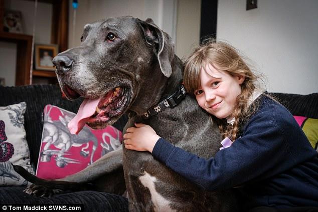 Дог, который весит, как слоненок, может стать самой тяжелой собакой Великобритании
