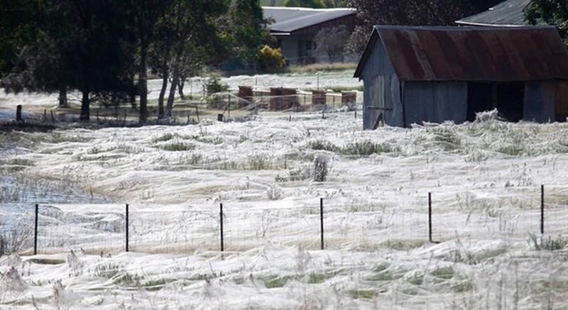 Поле в Новой Зеландии накрыло гигантской паутиной