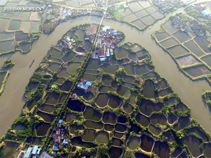 В Китае восстанавливают древнюю систему тутовых прудов для разведения рыбы
