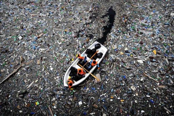 «Пластосфера»: на мусорных островах в океане сформировалась своя экосистема