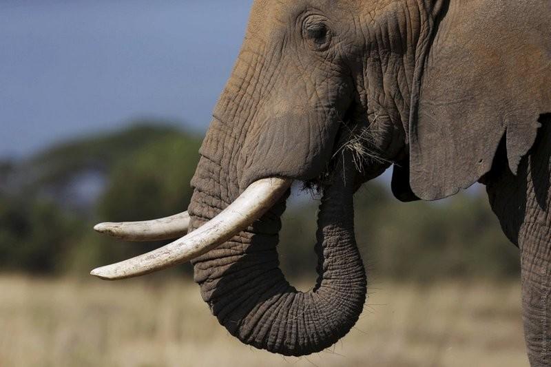 В Николаевский зоопарк приедет слон из Нидерландов!
