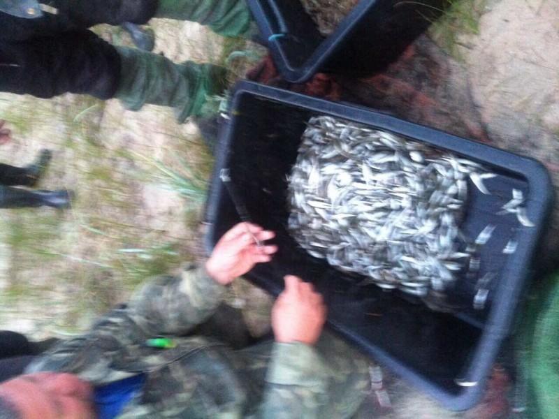 И снова браконьеры в Березанском лимане. У них изъяли креветки и атерину