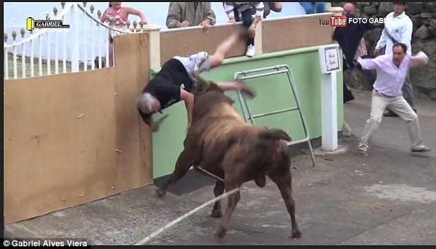 В Португалии во время «touradas à corda» бык основательно потрепал мужчину, который хотел снять яркие кадры на свой iPad