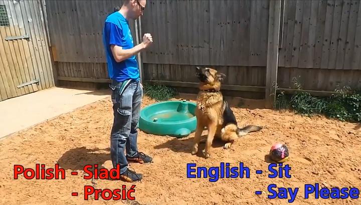 «Моя твоя не понимает»: в Англии для пса ищут хозяев, которые говорят по-польски