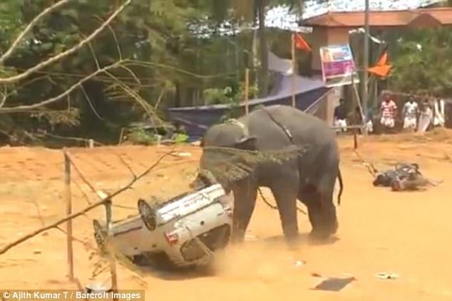 Разгневанный слон – зрелище страшное: в Индии элефант переворачивал машины и мотоциклы