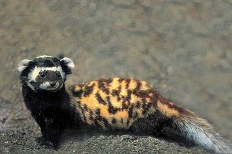 В Николаевском зоопарке появилась Лёля – новый питомец, привезенный из зоны АТО