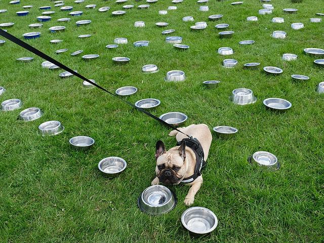 Собачья свадьба и 28 тыс. гостей. Массовый выгул прошел в Англии