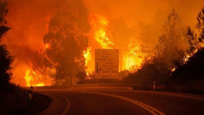 Число жертв лесных пожаров в Португалии превысило 40 человек