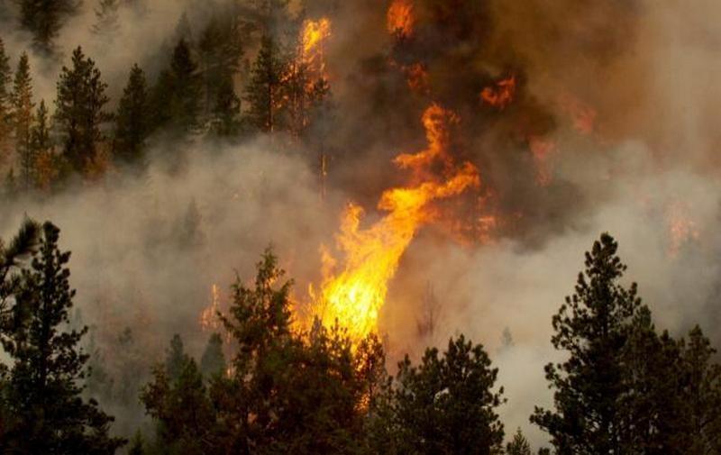 В Испании из-за угрозы лесных пожаров эвакуировали более тысячи человек