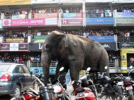 В Индии слон насмерть затоптал пять человек