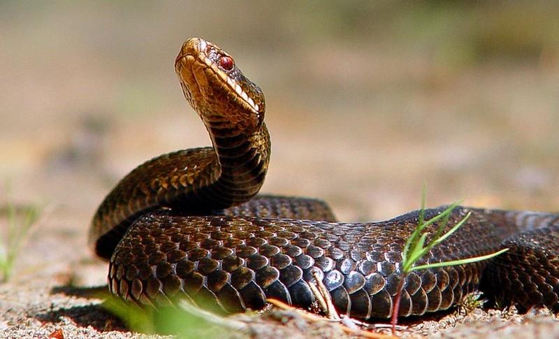 Президента Либерии змеи выжили из кабинета