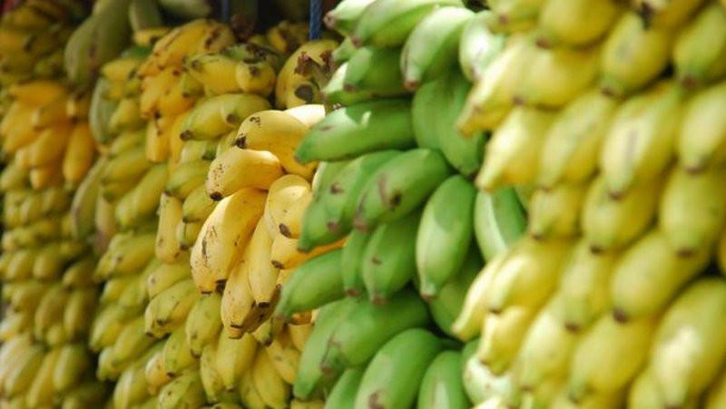 Австралийские ученые вырастили бананы, которые смогут спасать жизни умирающих от авитаминоза