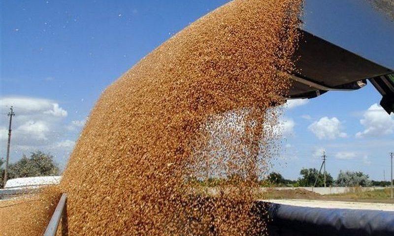 В Госрезерве хранится зерно 20-летней давности, на свежее денег не дают 5