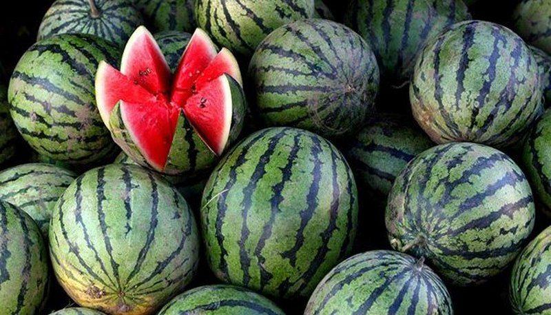 Как выбрать спелый арбуз: полезные советы