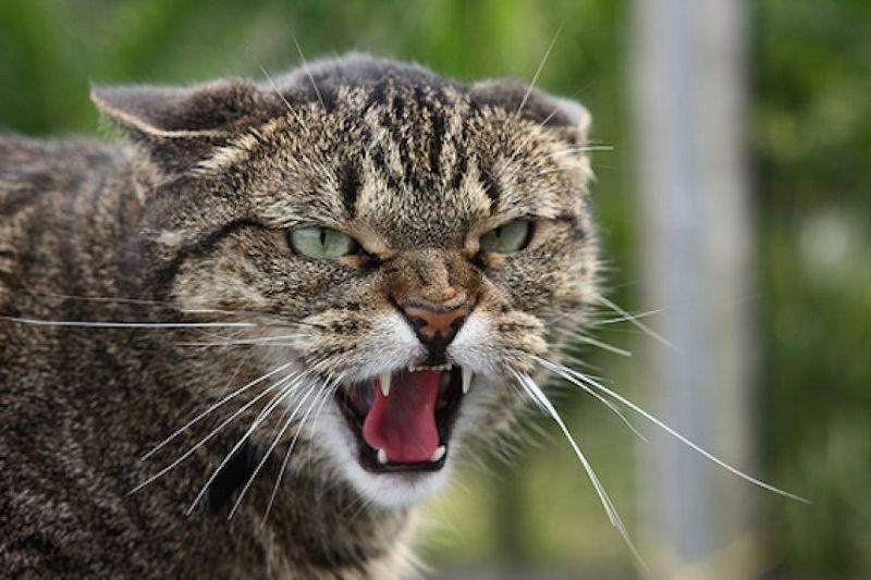 Бесконтактный бой в условиях самоизоляции: драка двух котов через стекло повеселила сеть (ВИДЕО)