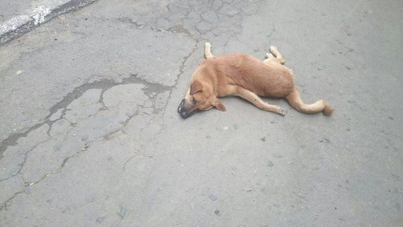 В Николаеве расклеили объявления о награде за информацию о человеке, отравившем 5 бездомных собак