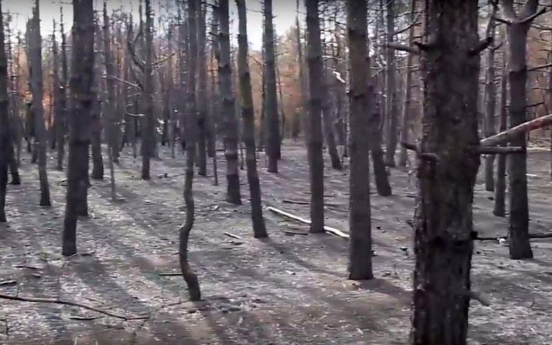 «Один человек — одно дерево»: жителей Николаевщины зовут на восстановление Новопетровского леса