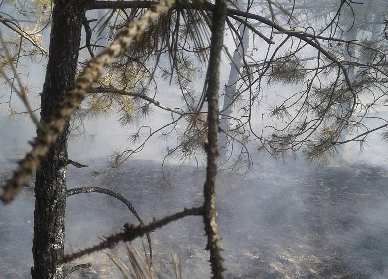 На Кинбурне горел лес – тушили сообща