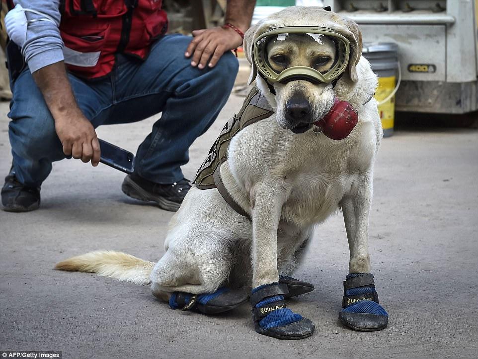 Знакомьтесь, это Фрида: как в разрушенной землетрясением Мексике собака стала национальным героем 3