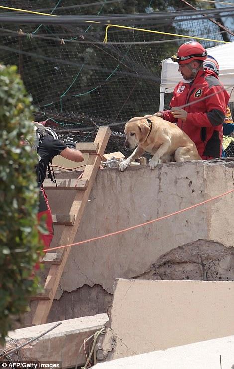 Знакомьтесь, это Фрида: как в разрушенной землетрясением Мексике собака стала национальным героем 5