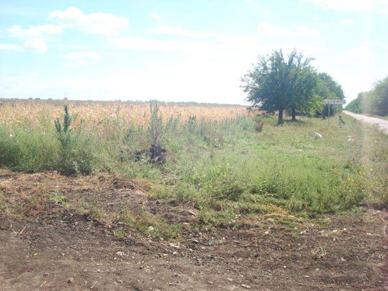 940 кустов – у Богемки, 2200 кустов – у Сергеевки: на Николаевщине правоохранители нашли плантации конопли