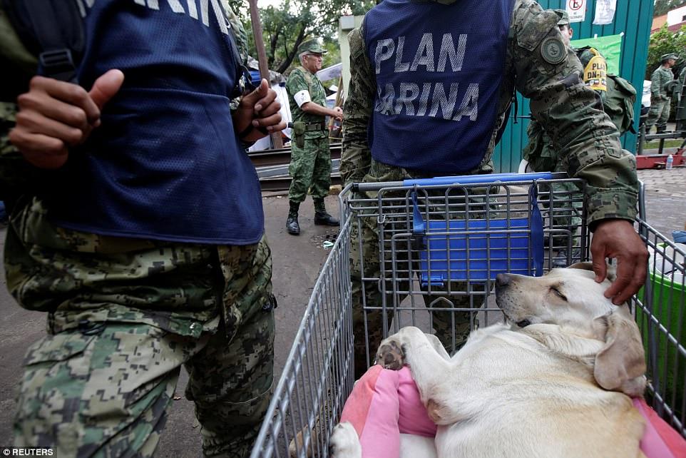 Знакомьтесь, это Фрида: как в разрушенной землетрясением Мексике собака стала национальным героем 9