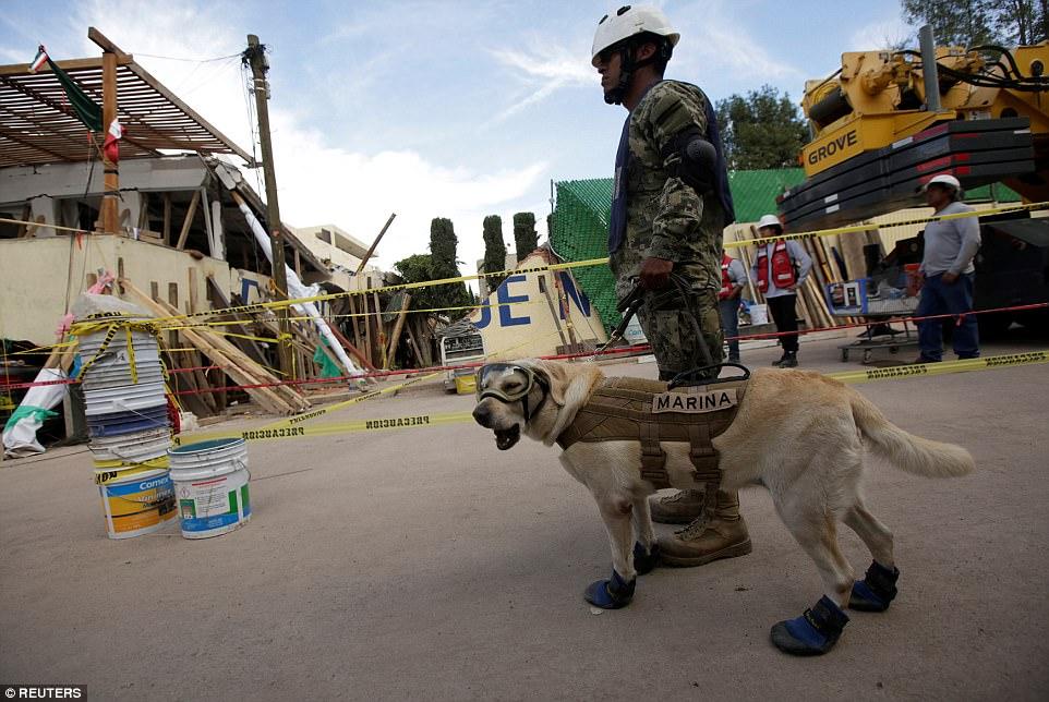 Знакомьтесь, это Фрида: как в разрушенной землетрясением Мексике собака стала национальным героем 11