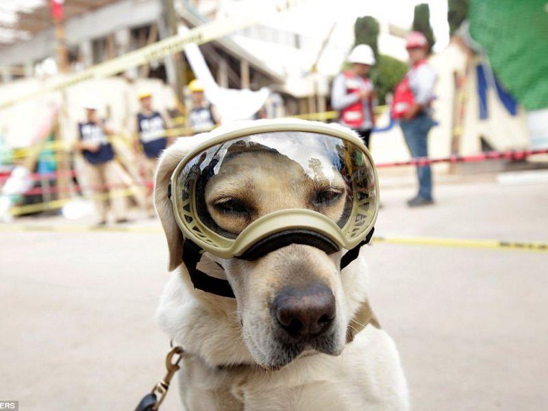 Знакомьтесь, это Фрида: как в разрушенной землетрясением Мексике собака стала национальным героем