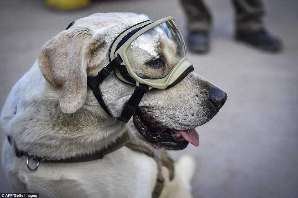Знакомьтесь, это Фрида: как в разрушенной землетрясением Мексике собака стала национальным героем 1