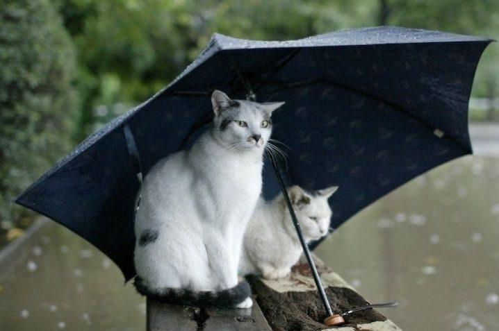 На Николаевщине гостит «Изольда» – дожди и на выходные не прекратятся